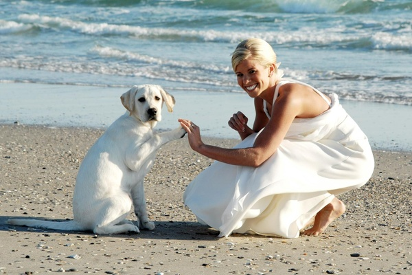 Bride shakes lab puppy's paw on beach
