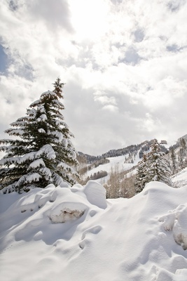 Snowy evergreen and ski slopes in Aspen, Colorado