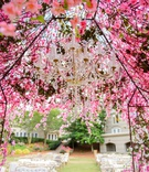 Wedding ceremony outdoor lounge seating and vineyard chairs pink flower chuppah chandelier