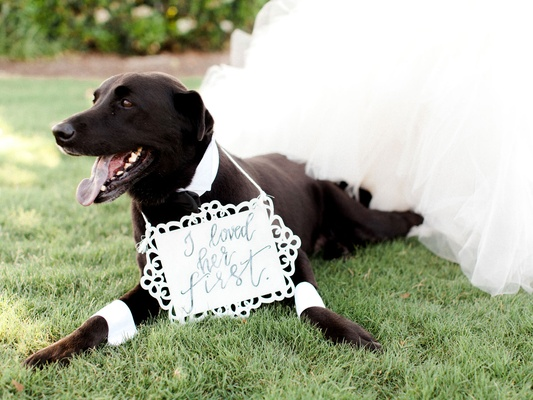 Dog at wedding pet wearing cuffs and collar with i loved her first sign around neck wedding day