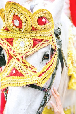 horse decorated for indian grand entrance, baraat