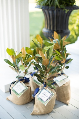 Southern wedding magnolia tree wedding favors for all guests plants planters