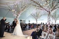 Bride and groom on stage in front of officiant with tree decorations