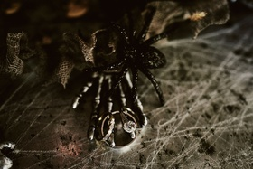 wedding engagement ring and band with spider skeleton hand cobweb halloween wedding ideas