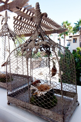 Chicken wire bird cages with bird nests inside