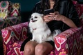 White small dog pomeranian sitting on bridesmaid lap in black robe while getting ready colorful