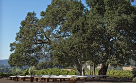 Wedding ceremony outdoor kenwood california wine country cushion benches for guests wood arbor
