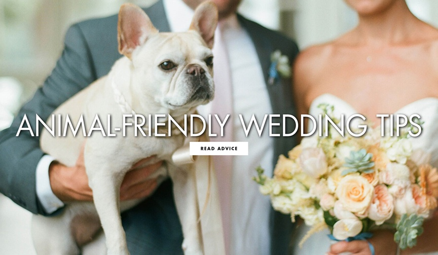 Animal friendly wedding tips and advice