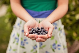 Guest holds fresh blueberries in hand