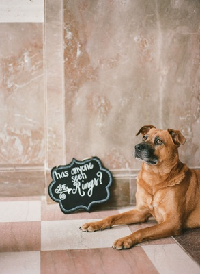 Wedding ceremony dog tan brown with die cut sign chalkboard has anyone seen the rings?