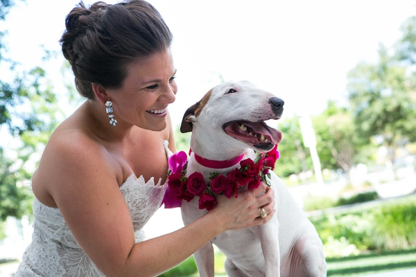 a smiling bride cuddles her miniature bull terrier dog wearing pink floral collar