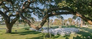 outdoor ceremony with large tree sprawling over the seats