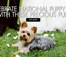 celebrate national puppy day with these precious pups wedding ideas national puppy day