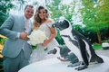 ashley alexiss with husband travis wedding day penguin at cocktail hour activity