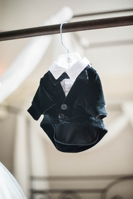 small tuxedo for puppy on hanger, dog as ring bearer tuxedo