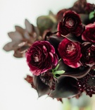 Burgundy black calla lily flower and burgundy oxblood rose ranunculus flowers slight greenery