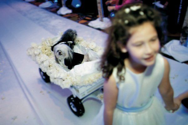 Little hairy dogs in a white rose wagon