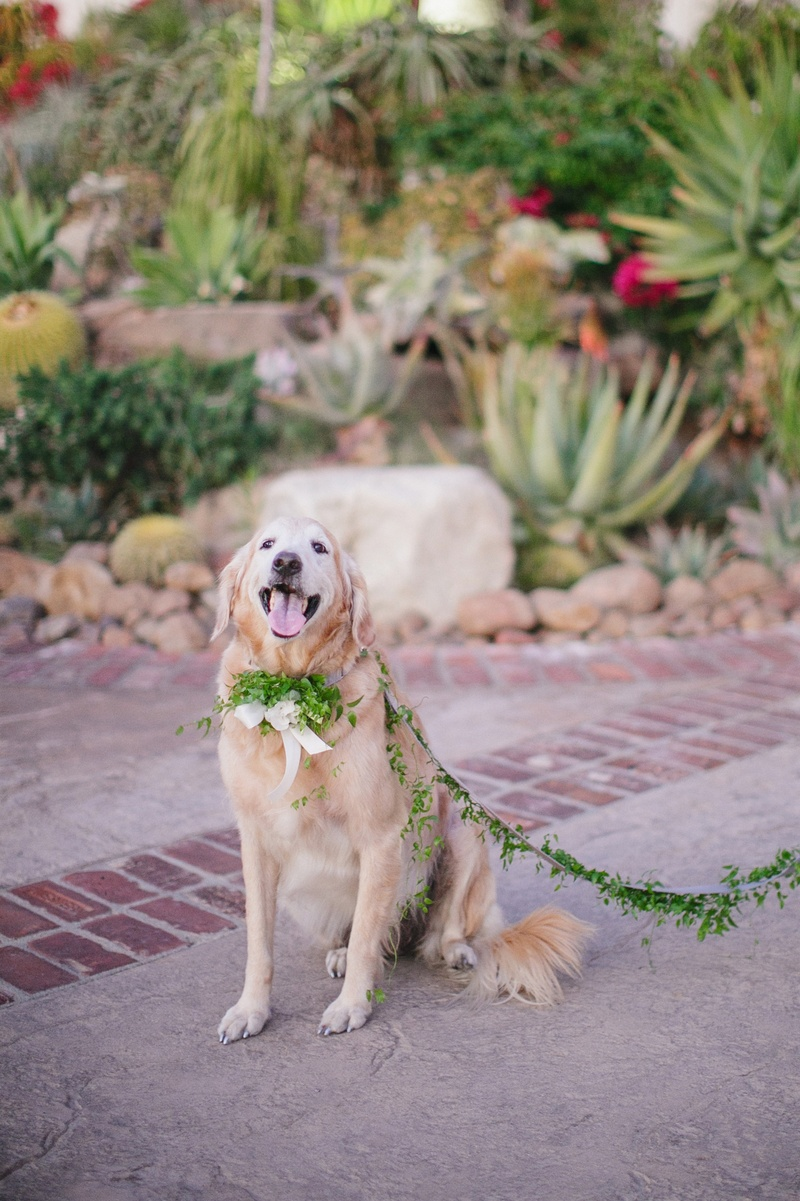 Pet in wedding with garland of leaves as leash