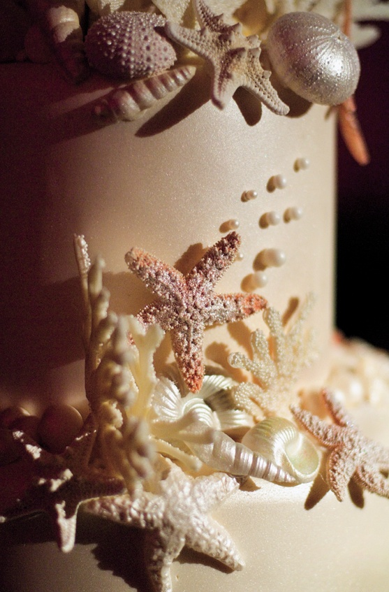 close up seashells and coral decorating the top cake tier