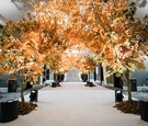 trees with fall foliage line entrance to reception