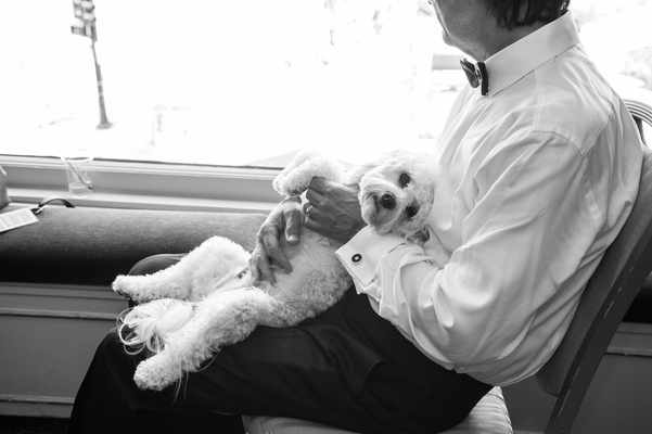 black and white photo of puppy lying in father of the bride lap