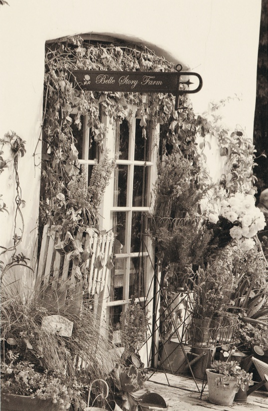 Black and white picture of Santa Barbara rose farm