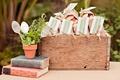 Terra cotta pot and wooden crate