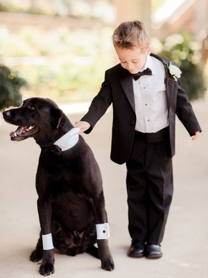Ring bearer in tuxedo holding dog lab with cuffs and collar suit bow tie