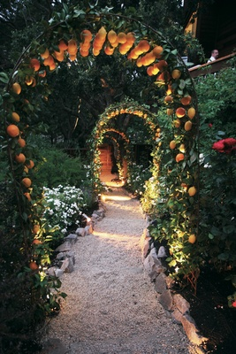 Wedding arch with lemons and oranges