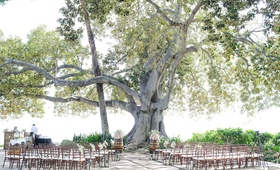 Hawaii wedding under banyan tree with wood chairs, wine barrel altar, and fresh flowers