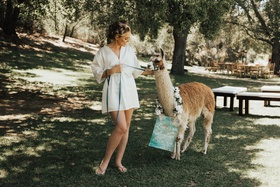 bride in robe and curlers leading an alpaca with wedding sign on a leash
