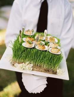 Wedding appetizers of scallops