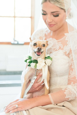 lap dog with floral collar sitting on the lap of the bride