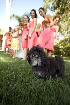 Black dog with bridesmaids at wedding ceremony