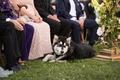 bride and groom's husky watches wedding ceremony