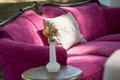 Bright pink fuchsia antique sofa wood backing with side table white vase with yellow flowers lounge