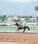 Jockey on top of brown horse at santa anita race track california wedding venue ideas ferris wheel