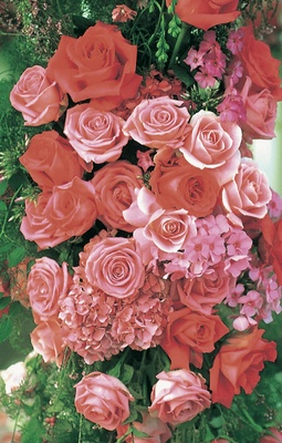 Pink and red roses and hydrangeas and greenery