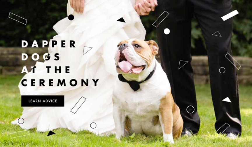 How to have your dog in the wedding