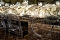 Clear acrylic ghost dining chairs with monogram detailing on round back wedding reception