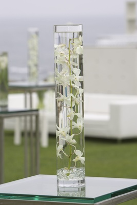 orchid plant submerged in water in tall glass vase