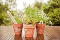 Guests potted plants in terra cotta pots