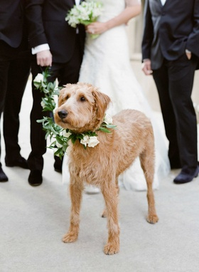 Couple's dog with flower and leaf collar and leash on wedding day