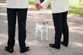 couple and their dog Maisy Jack Russell Terrier
