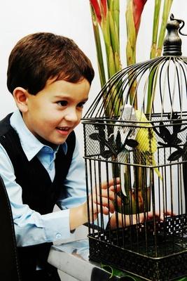 Little boy plays with parakeet birds in bird cage