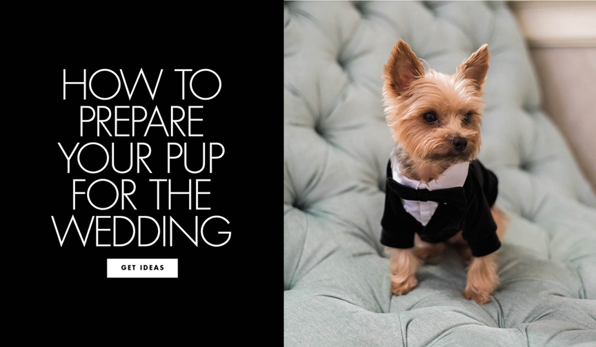 How to prepare your pup for the wedding training your dog to cooperate for the ceremony