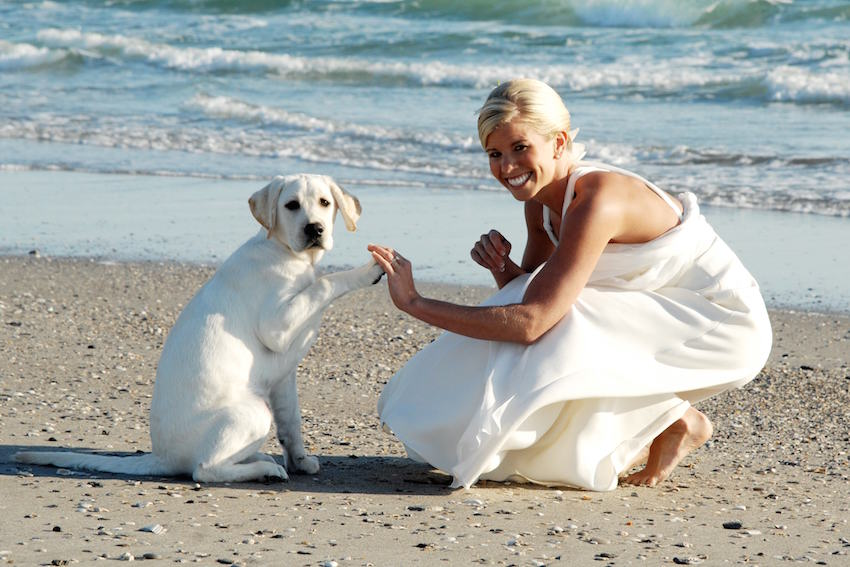 Bride with white lab dog on beach high five