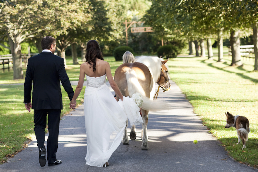 Bride and groom walking with horse and dog