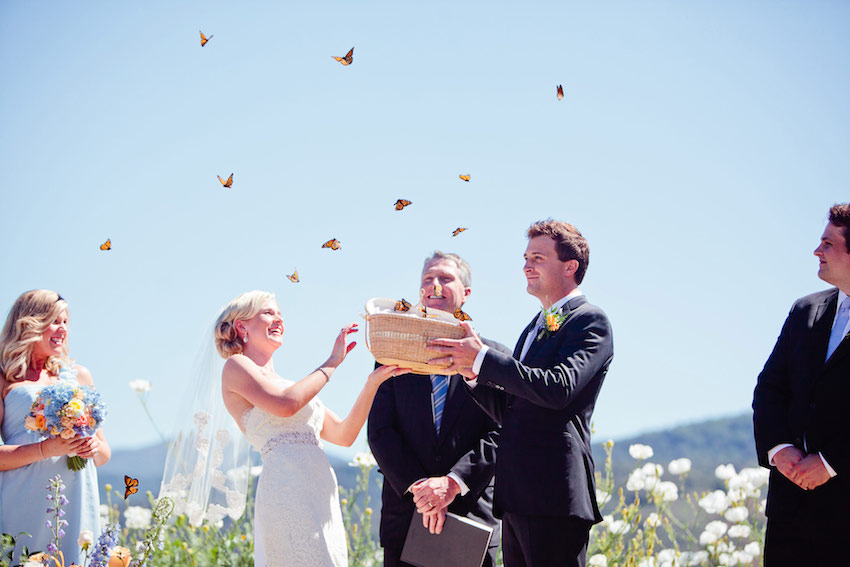 Butterfly release at wedding ceremony