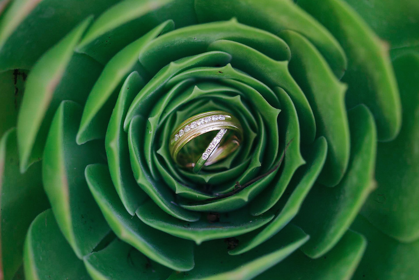wedding ring photo in succulant
